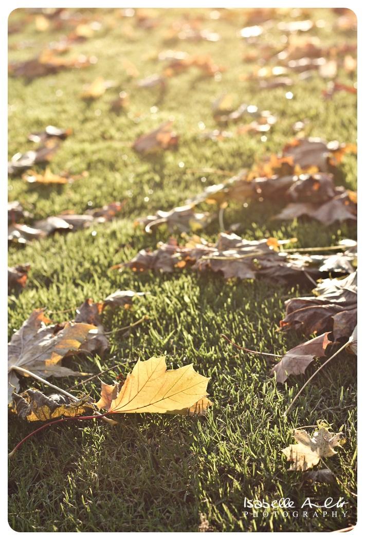 Bilder vom goldenen Herbst