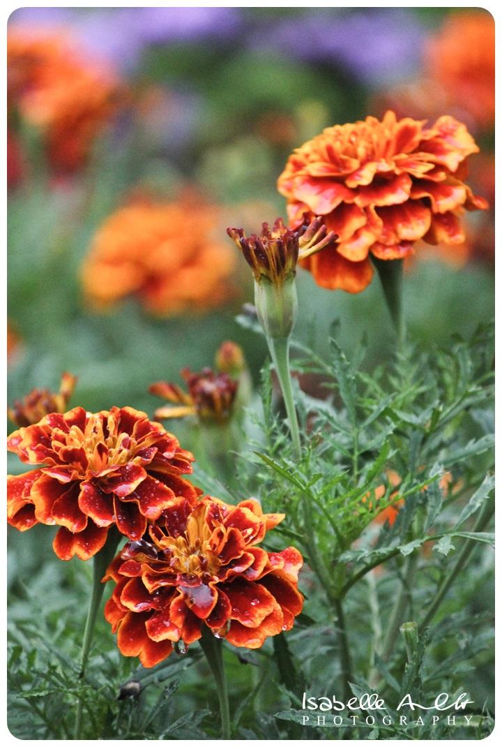 FlowerIMG_8574