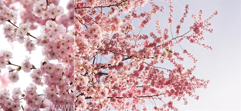 April ist Kirschblüten-Zeit