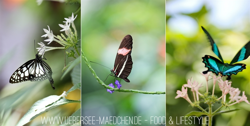 Blumeninsel Mainau-19-horz