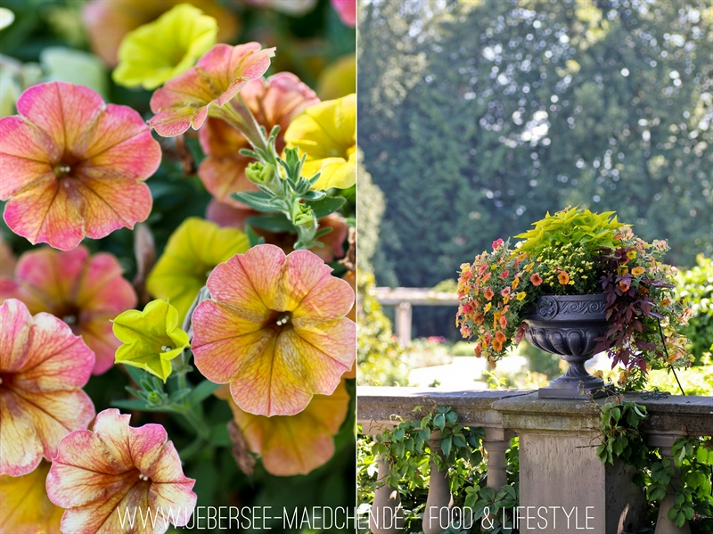 Blumeninsel Mainau-40-horz