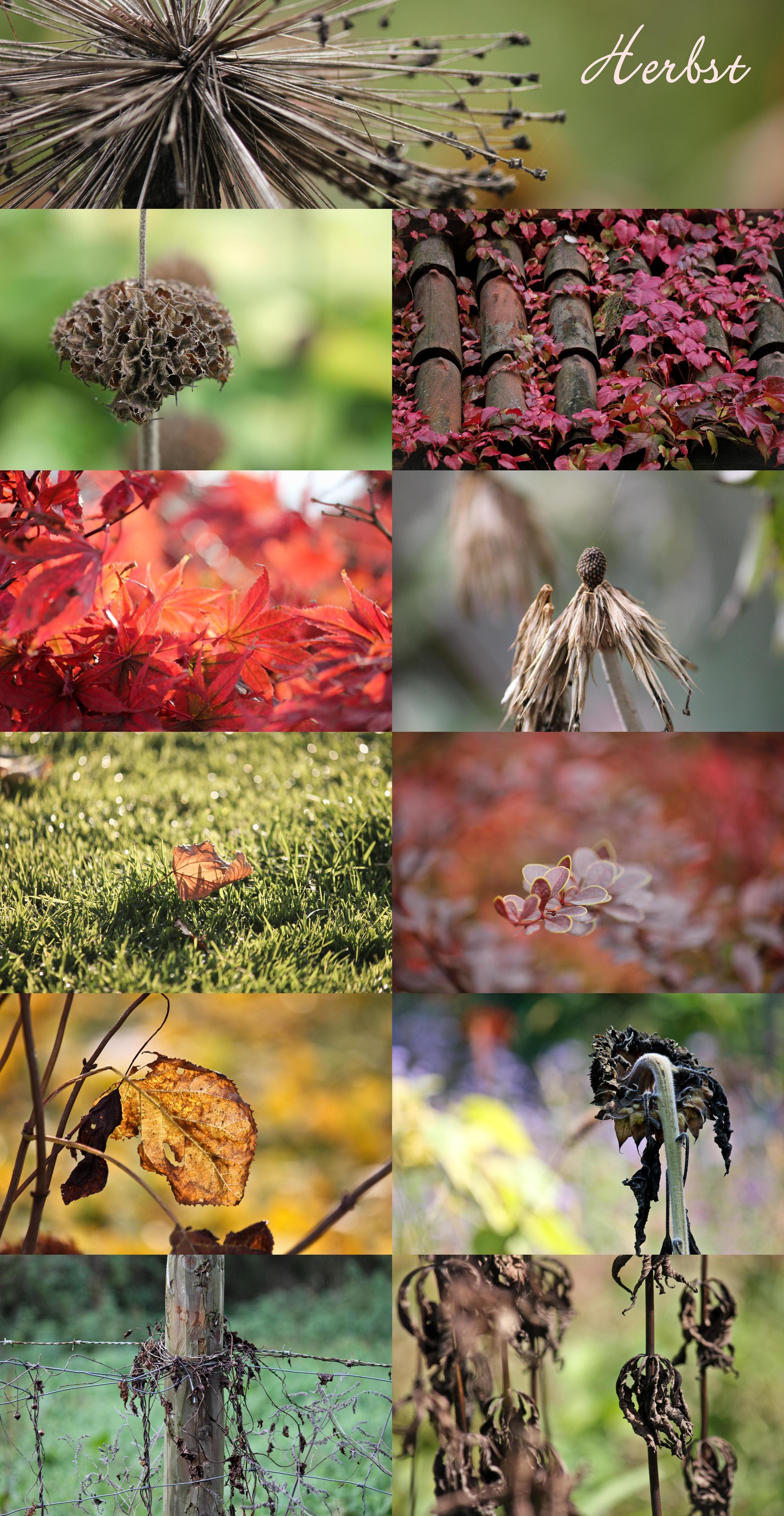 03 Herbst