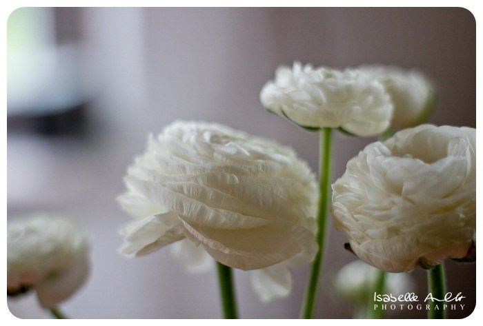 Flowers Raphael