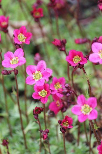 Frühling in Bildern