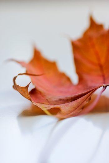 Neue Macro-Linse Herbstblatt