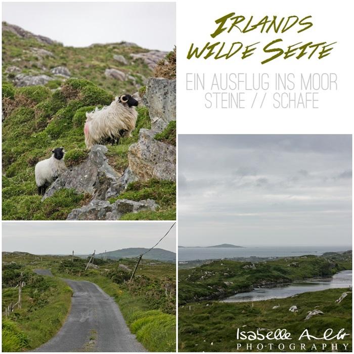 Irlands wilde Seite - Moor