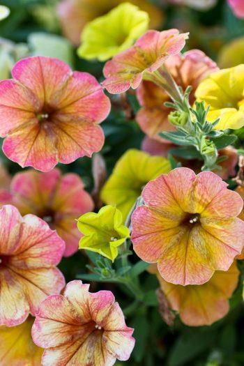 Besuch auf der Blumeninsel Mainau