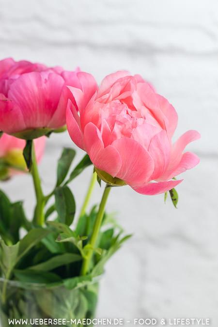 Pfingstrosen apricot-rosa