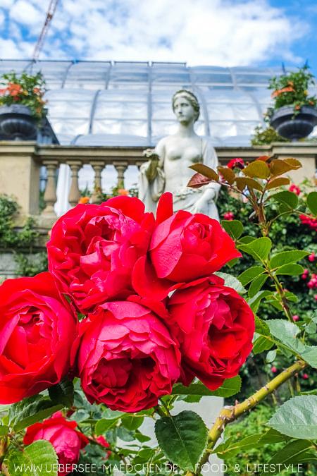 Rosen vor dem Palmenhaus auf der Blumeninsel Mainau