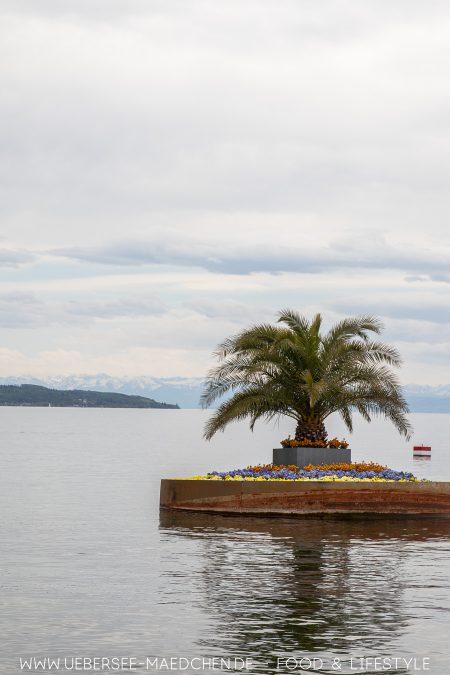 Schwimmende Garteninsel bei der LGS Überlingen mit Palme
