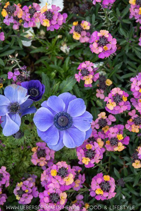 Blumenbeet bei der Landesgartenschau Überlingen
