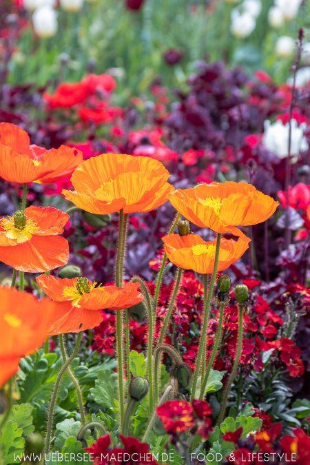 Blumen bei der Landesgartenschau Überlingen