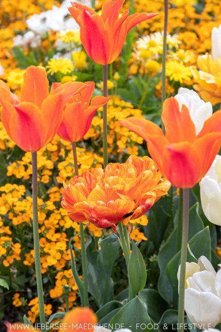 Blumenmeer mit Tulpen bei der LGS Überlingen