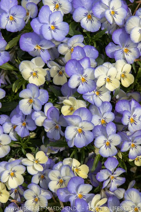 Blumen bei der LGS Überlingen